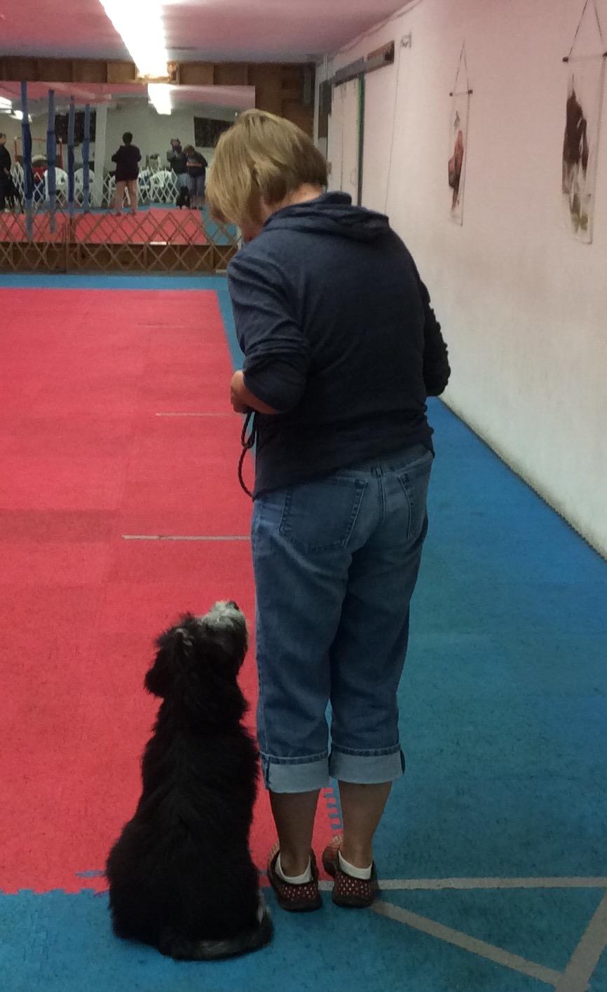 Southtowns Dog Training Club, New York, Dog Training Hamburg NY